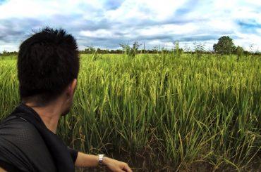 Endless Rice Paddy Field in Vietnam /// Vinjatek